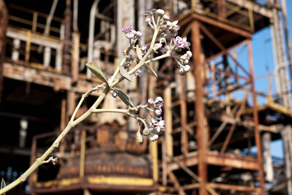 A small bud growing in front of the Union Carbide plant in Bhopal, where in 1984 a leak of methyl isocyanate gas and other chemicals from the plant resulted in the exposure of hundreds of thousands of people [Jeremy Young]