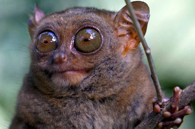 tiny primate uses  u0026 39 private channel to talk u0026 39