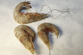 Coverup No More: Shocking Photos Dead Wildlife from Gulf of Mexico Spill Emerge | 201241683729150734_3 | Environment EPA News Articles Toxins US News