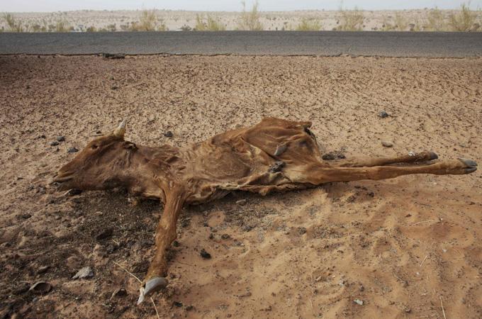 2012617104725391734 20 jpgSahel Drought