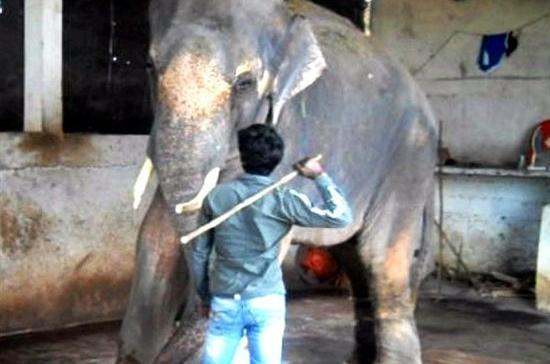 Court orders tortured elephant to be freed | News | Al Jazeera