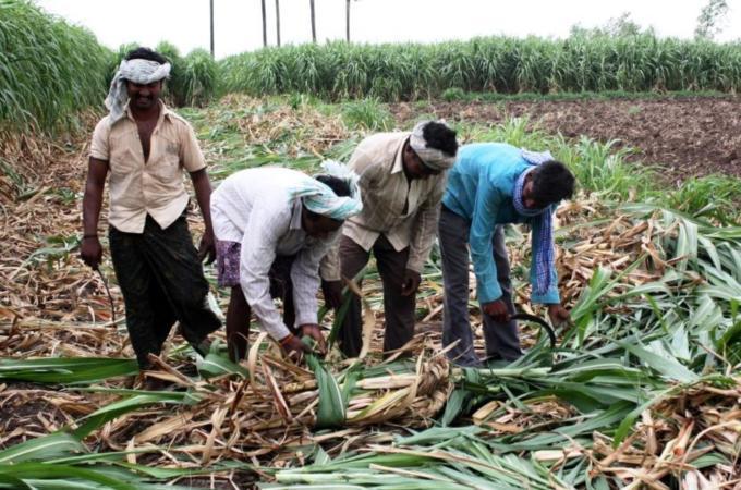 essay on farmer for kids