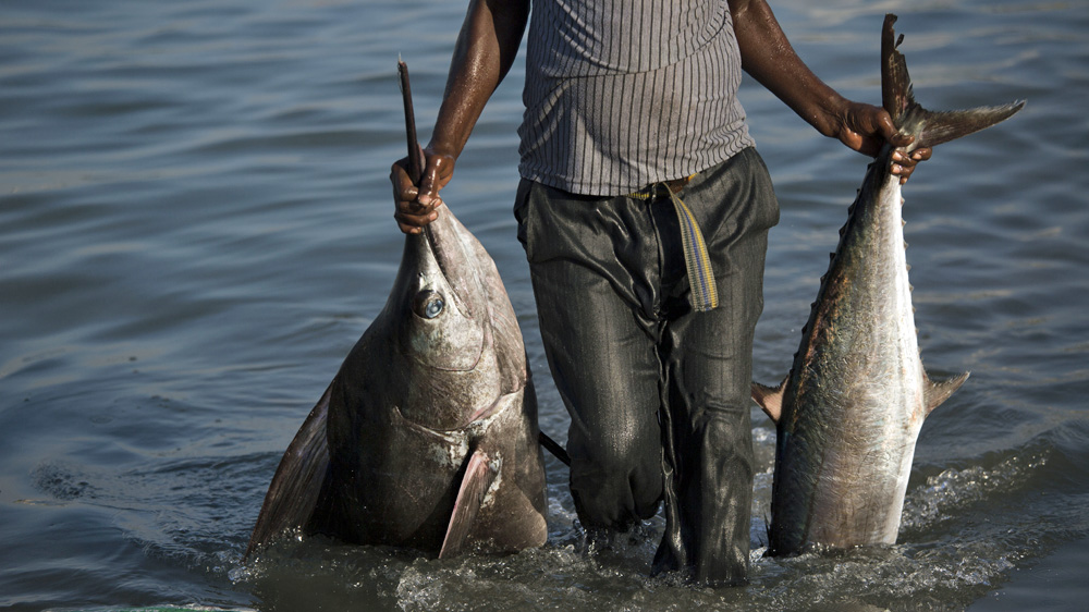 Illegal overfishing and the return of Somalia's pirates