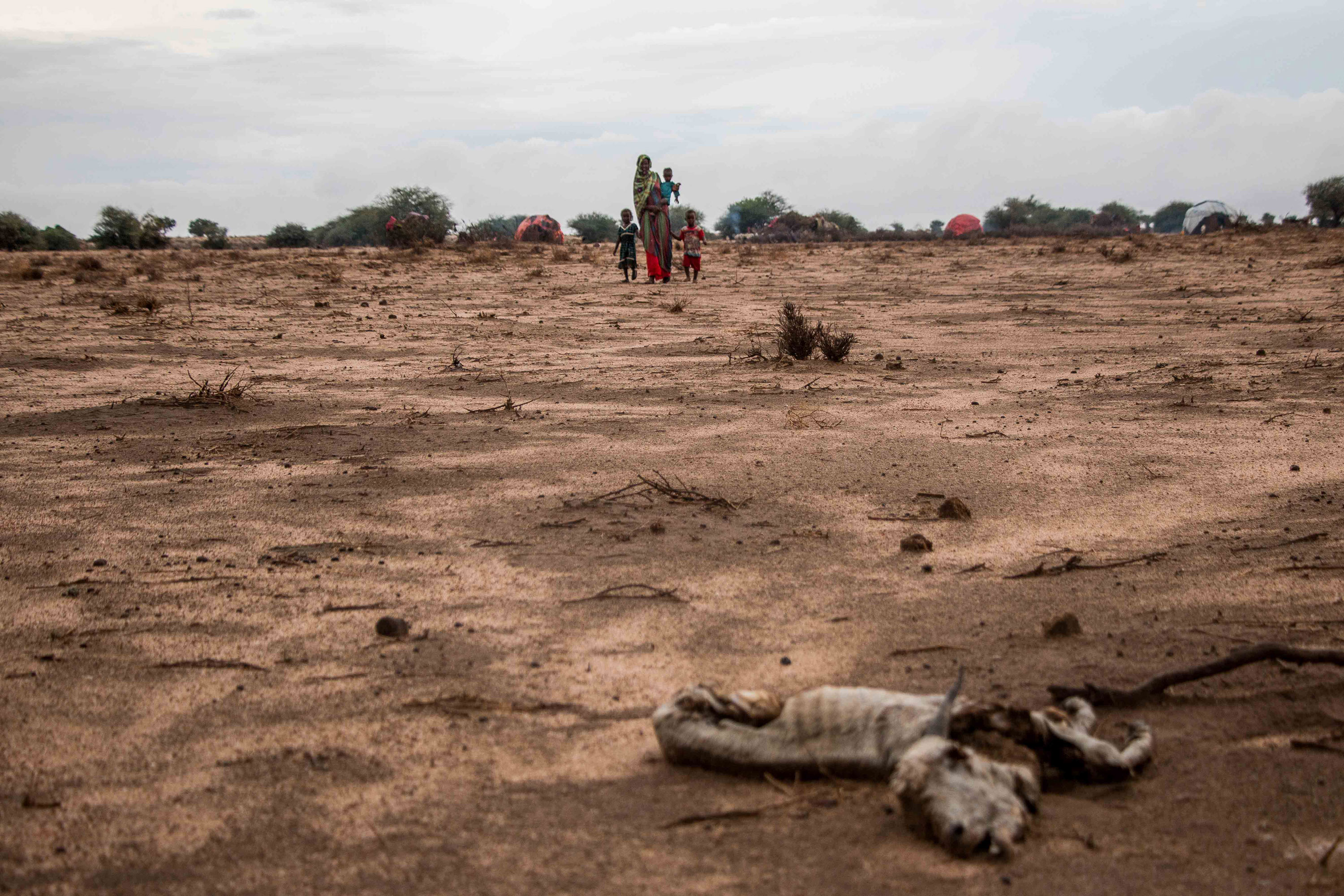A herder family living in a bush camp in Somaliland's drought-devastated Awdal region. The camp and others like it across Awdal are scattered with the carcasses of starved livestock. [Ashley Hamer/Al Jazeera]