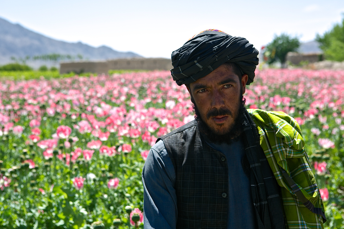 afghanistan and war on drugs But the united states and its coalition partners are now also emphasizing the eradication of afghanistan war in afghanistan undermines war on drugs in latin.