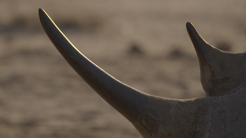 Is corruption in South Africa perpetuating poaching?