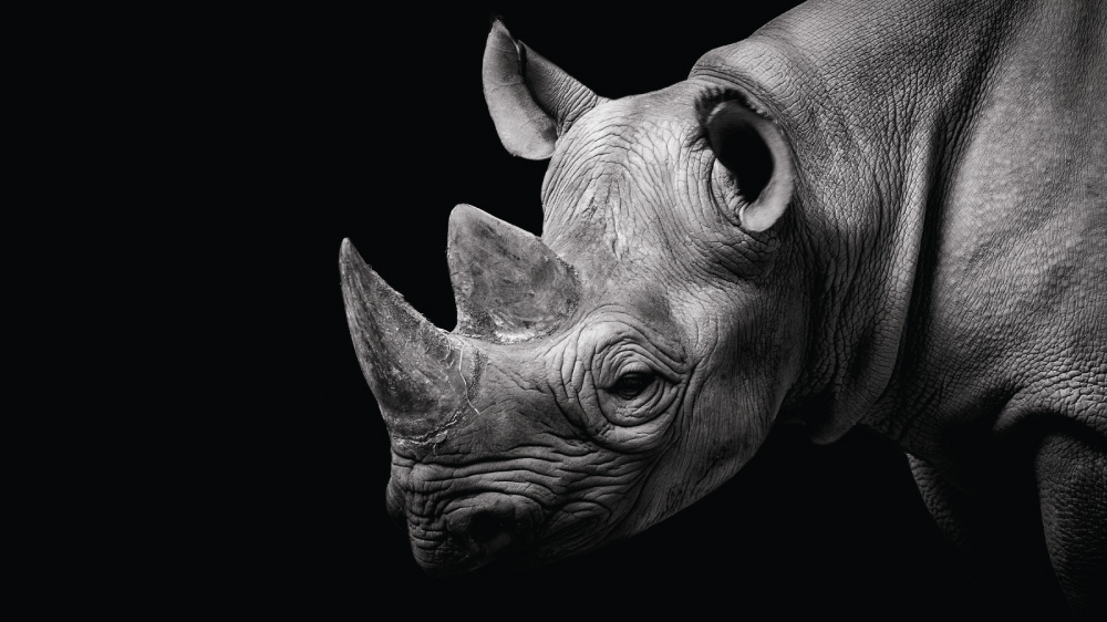 Al Jazeera investigates the illegal trade of rhino horn from the hands of poachers in South Africa to consumers in Asia.