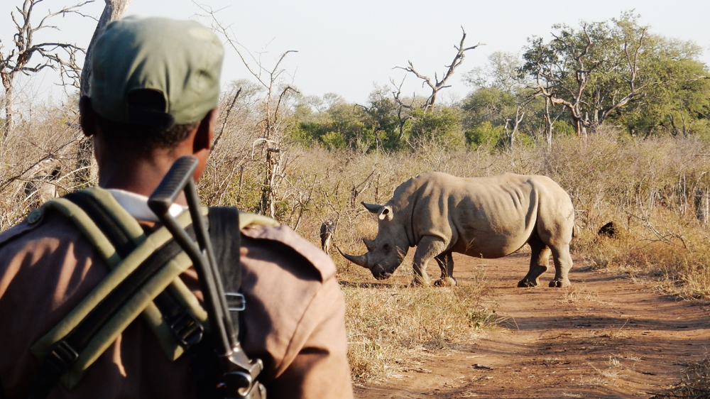 Our panellists discuss The Poacher's Pipeline, Al Jazeera's investigation into the illegal rhino horn trade.