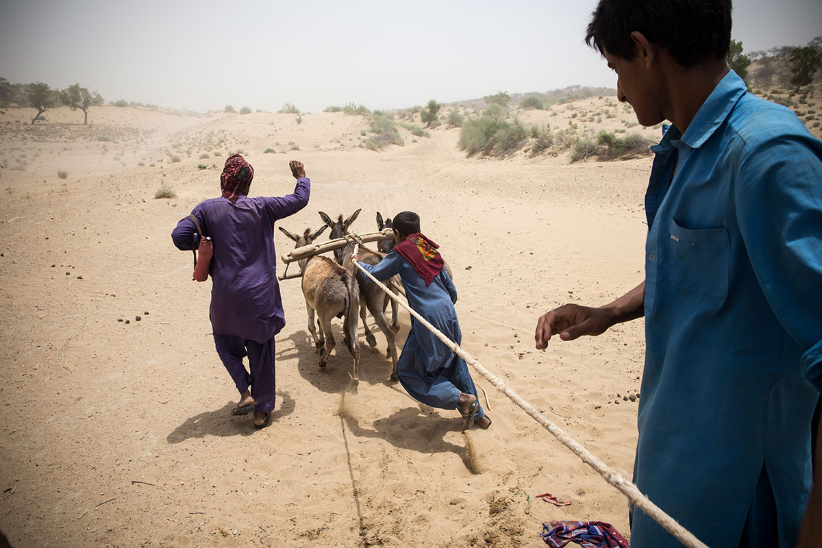 Mules are used to carry water from wells and water plants. Their strength is particularly useful in drawing water from wells, a process repeated multiple times throughout the day under the desert sun. [Faras Ghani/Al Jazeera]