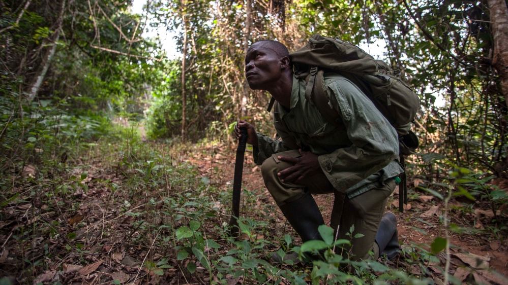 Former Kamajor militia fighters work to protect and breathe life back into the endangered Gola Forest.