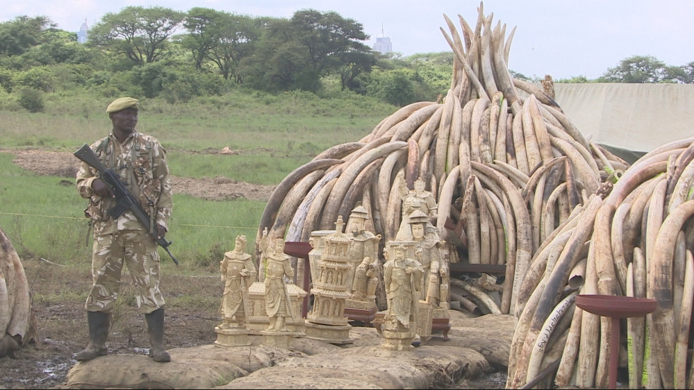 African leaders to gather in Nairobi to discuss how to tackle the dwindling number of elephants in the continent.