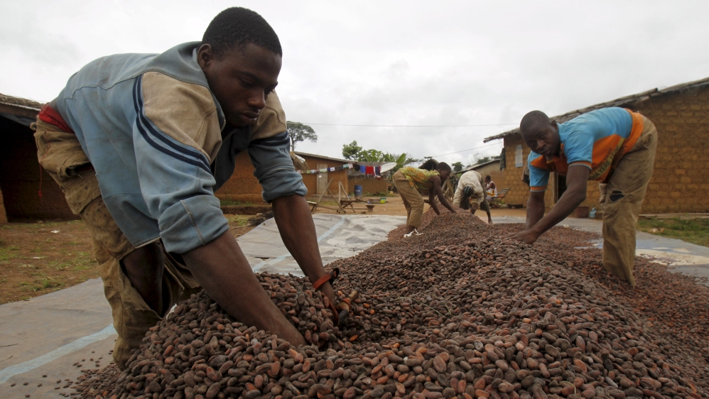 World's biggest exporter of cocoa beans takes what it calls its first step to become a player in the global industry.