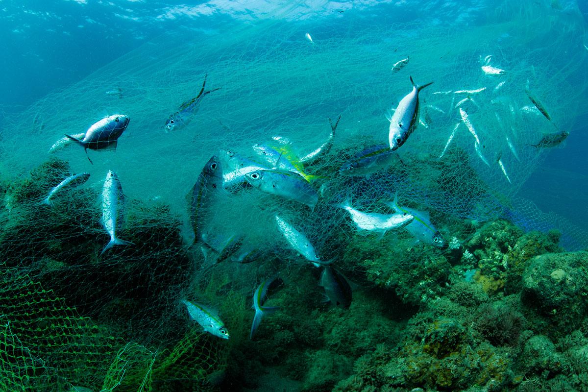 Madagascar on the hunt for sharks madagascar al jazeera for Gill net fishing