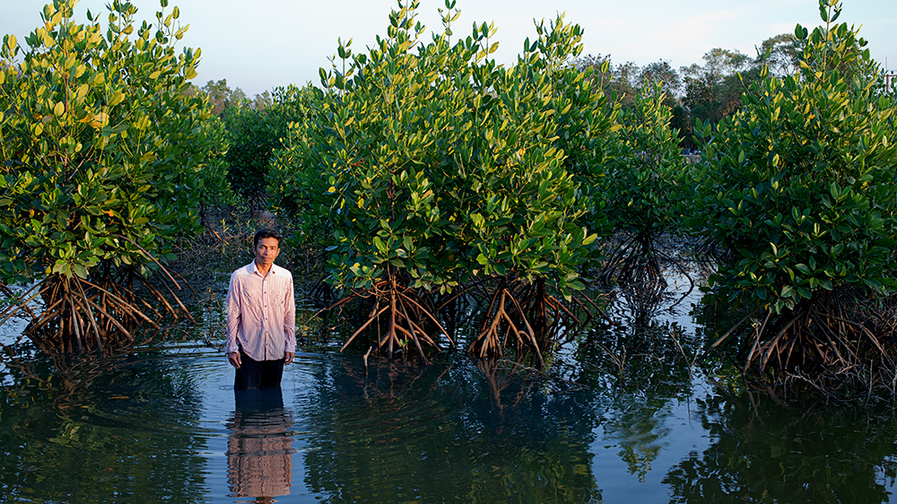 Thailand: Reclaiming mangroves for shrimp production | Thailand | Al
