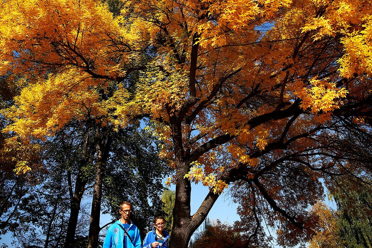 is it autumn yet in europe al jazeera rh aljazeera com  is it autumn yet meme