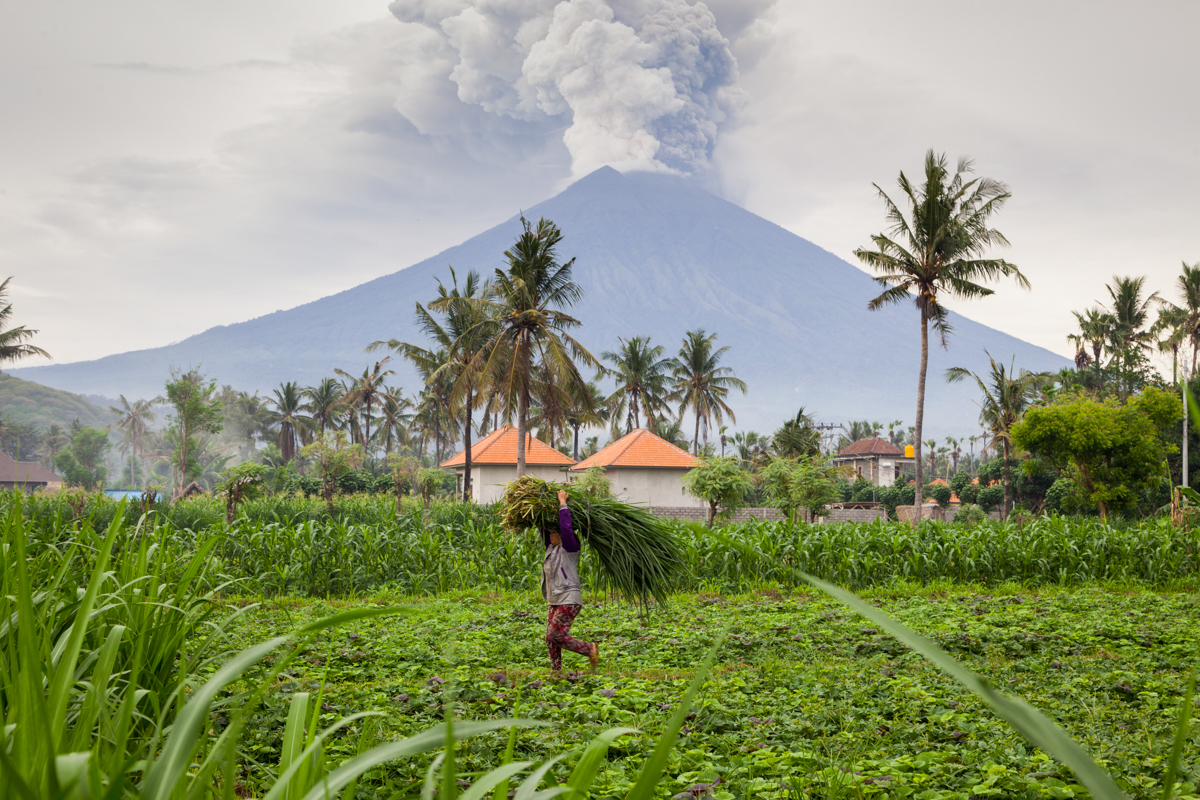 A farmer is seen carrying grass while Mount Agung spews heavy volcanic ash in Karangasem, on the island of Bali, Indonesia. Authorities told tens of thousands of people to leave an area extending 10 kilometres from the volcano as it belched volcanic material into the air. Mount Agung's last major eruption in 1963 killed about 1,100 people. [Andri Tambunan/Getty Images]