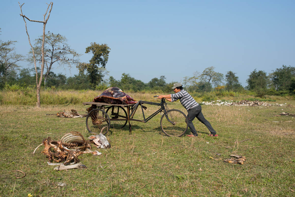 Yam carts the body into the middle of a clearing in full view of the watching birds. When the previous carcass is reduced to bones, a fresh body is prepared in the cage to attract the vultures. [Alexander Lerche/Al Jazeera]