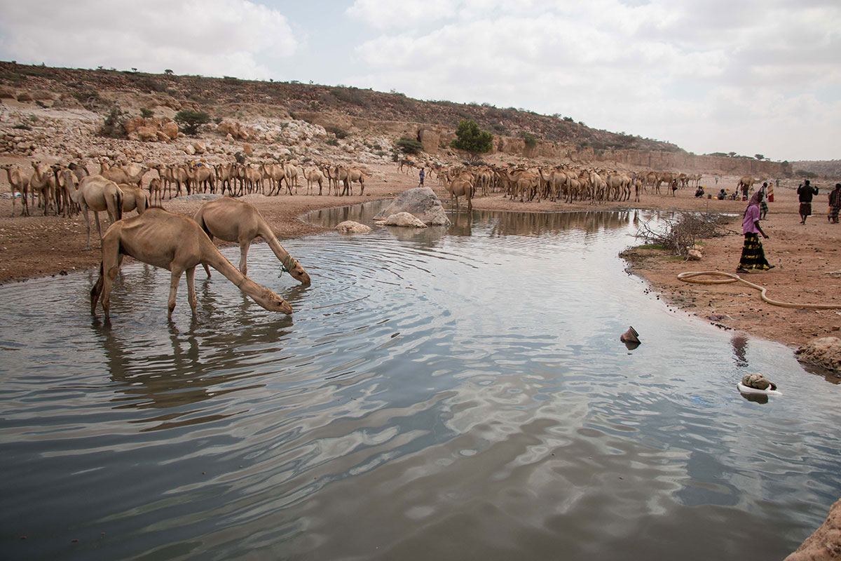 The diminishing stream at Dhudo, Bandar Bayla district in eastern Puntland. It is currently the only running water source within a 75km radius. [Ashley Hamer/Al Jazeera]