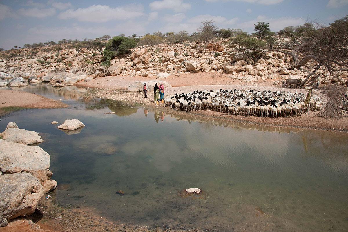 Drought strikes Puntland