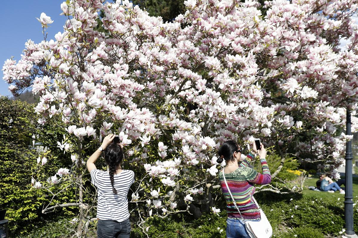 多彩的春天 - wuwei1101 - 西花社