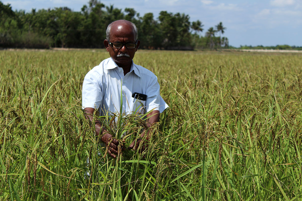Tamil Nadu farmers fight drought with organic farming
