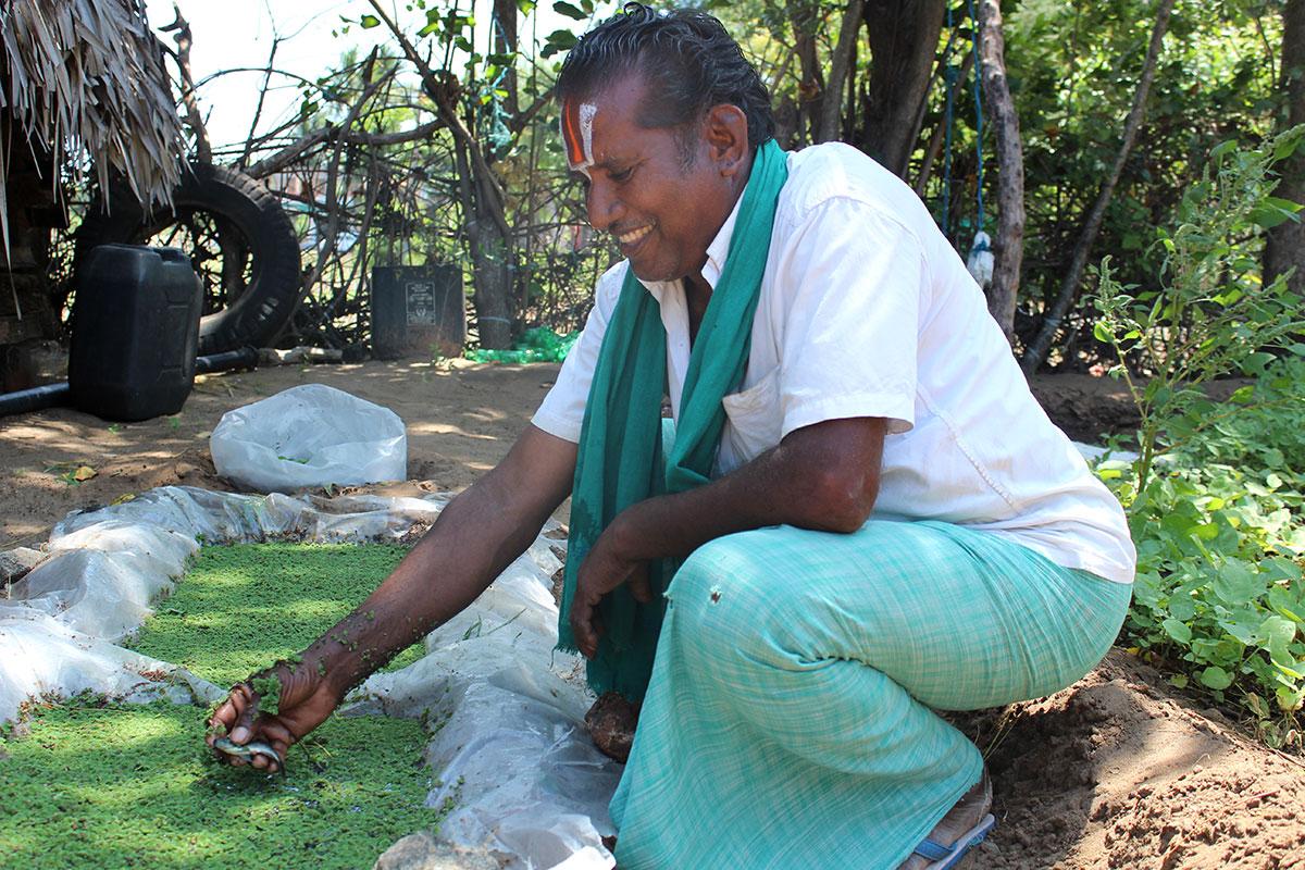 Tamil Nadu farmers fight drought with organic farming