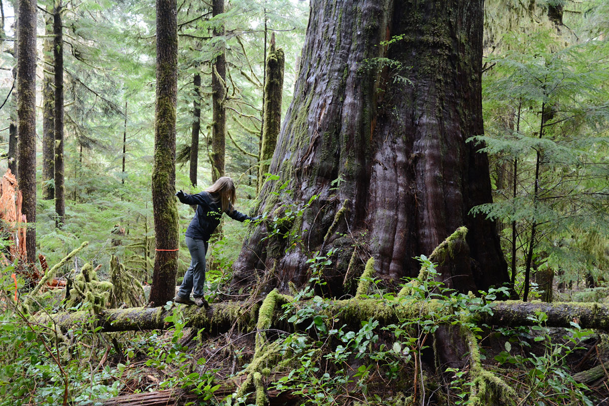 Natural Resources Found In The Temperate Rainforest