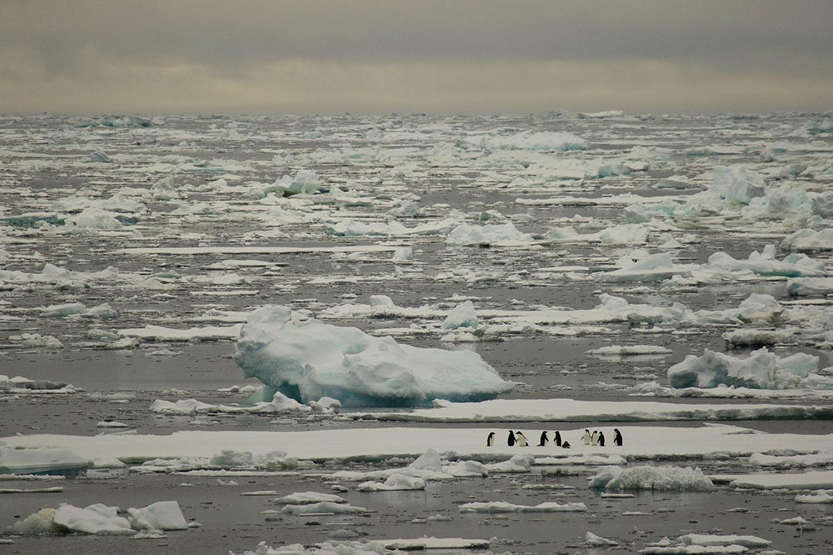 南极野生动物 - wuwei1101 - 西花社