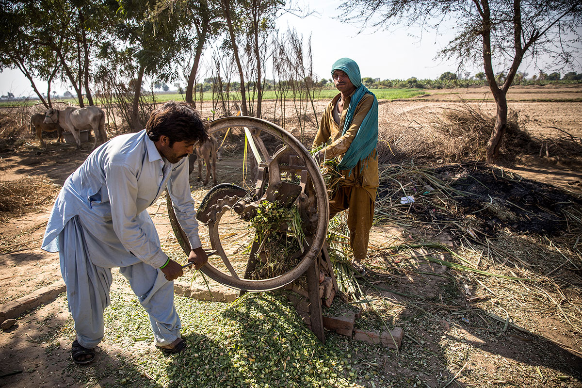 bonded labour in pakistan Government of pakistan until recently7 the bonded labor (abolition) act 1992  was the first law to officially recognize the existence of bonded.