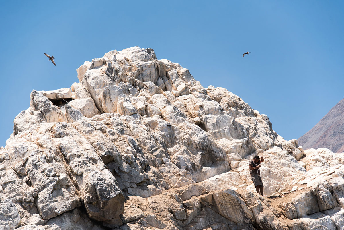 Juan Carlos Galvez ties himself to a rock with rope as he collects guano from its steep edges. Seabird guano contains nitrogen-rich ammonium oxalate and urate, phosphates, as well as some earth salts. [Berta Tilmantaite/Al Jazeera]