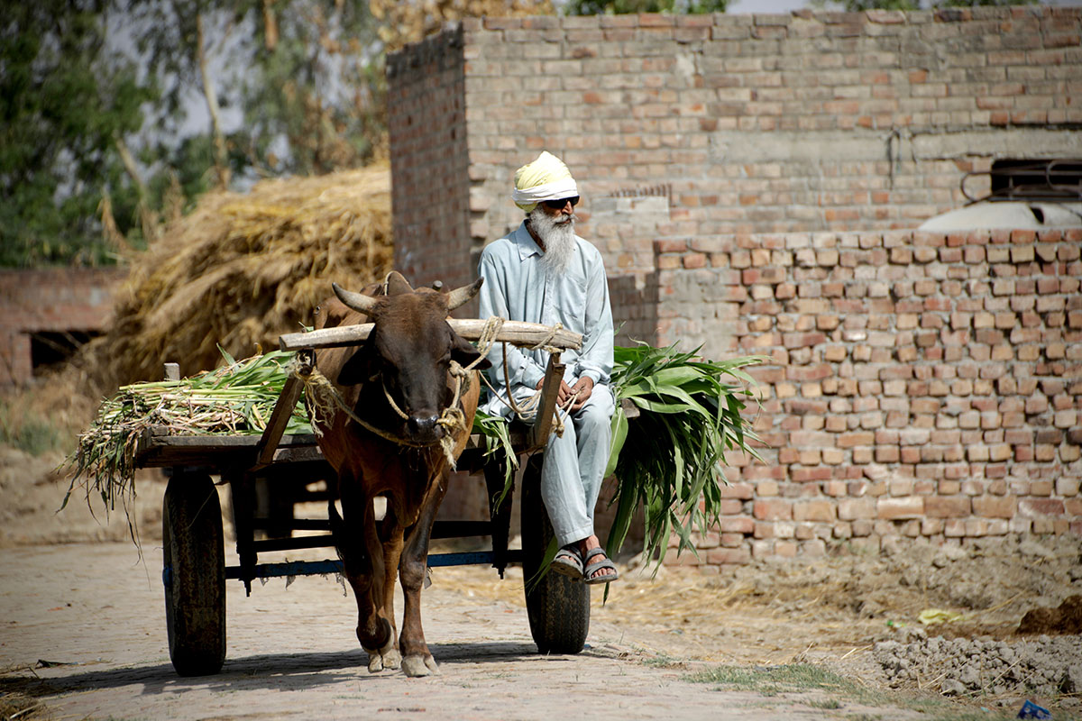 For rural communities on the Pakistan and India side of the Punjab region, life remains very much the same as in 1947. The memories of the horrific communal ...