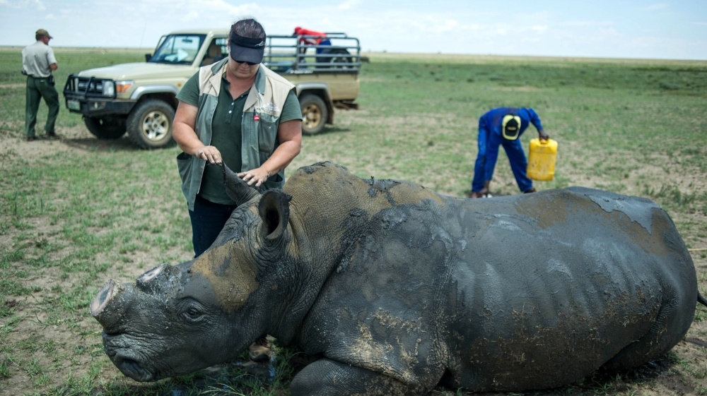 Breeders say open trade will stop poachers slaughtering rhino but activists say legal sales could fuel illegal hunting.
