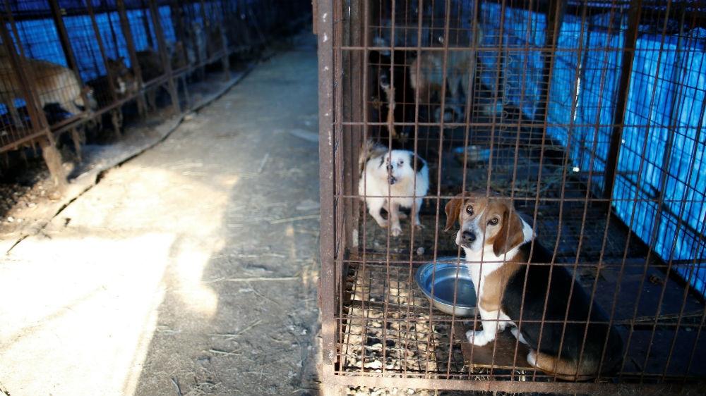 South Korea closes biggest dog slaughterhouse complex ... - photo#12