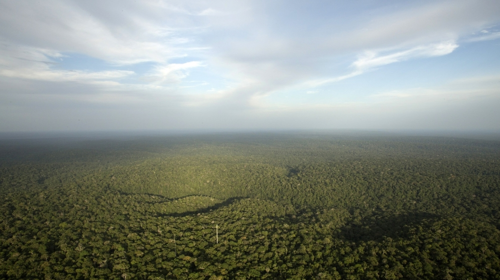 Why forests are the best 'technology' to stop climate change
