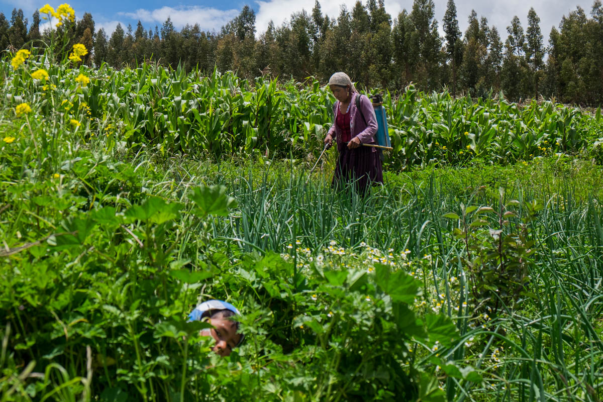 With her son playing next to her, Juanita Terrazas uses natural herbicides to protect the crops in her vegetable garden. The NGO Belgian Solidagro helps finance projects in her community. [Sanne Derks/Al Jazeera]