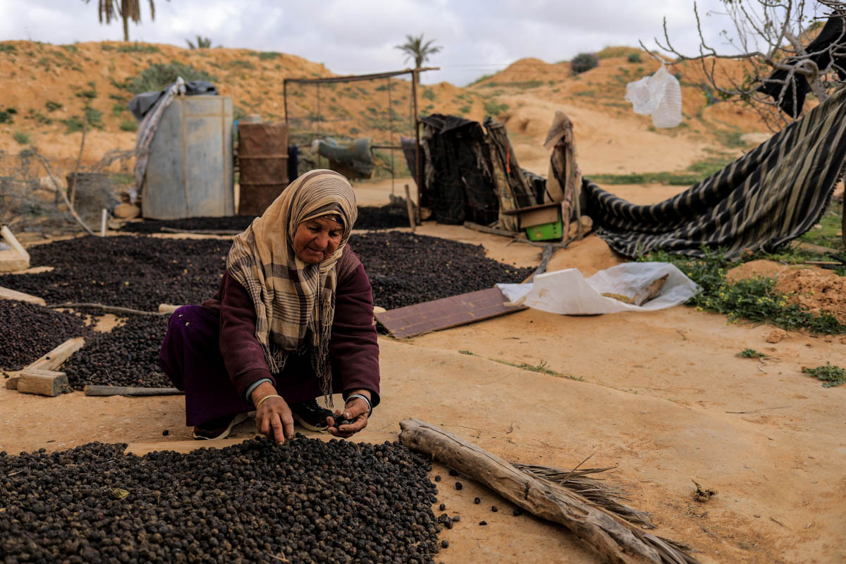 Aicha, 64, lays olives out to dry at her troglodyte house. [Zohra Bensemra/Reuters]