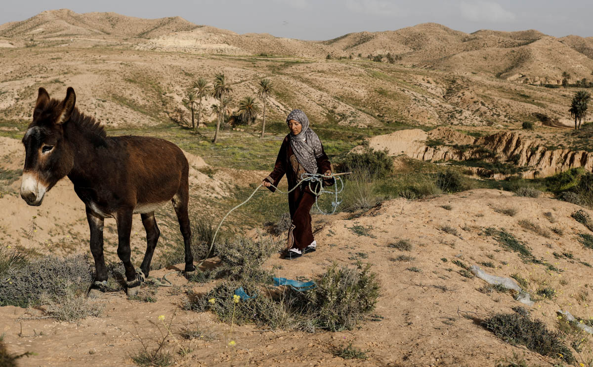 "Mounjia, 43, leads her donkey towards her troglodyte house in Matmata, Tunisia. ""I would like to leave for a modern house, but I'm not rich enough to build one in a new city. Life in a troglodyte community is exhausting. We have to fetch water and wood, we have no electricity and can't even install a solar panel,"" Mounjia said. [Zohra Bensemra/Reuters]"