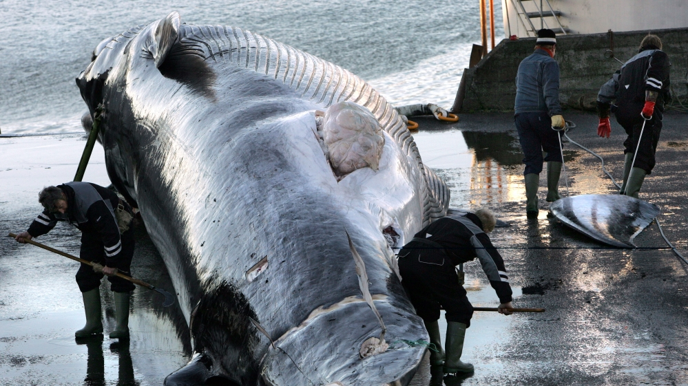 Japan's commercial whaling bid blocked at IWC