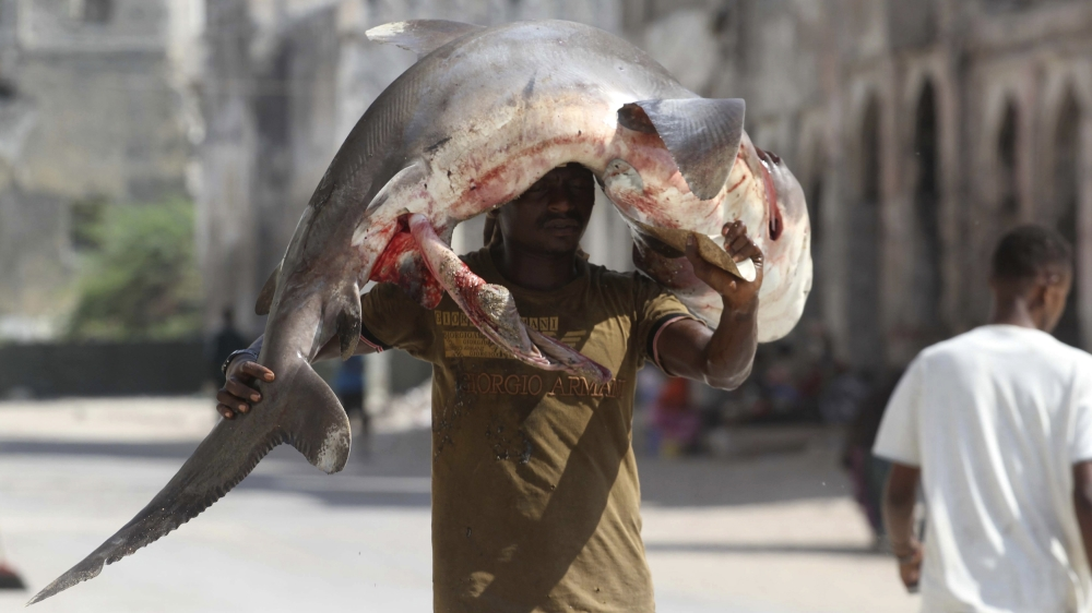 Why are humans killing 100 million sharks every year? | News