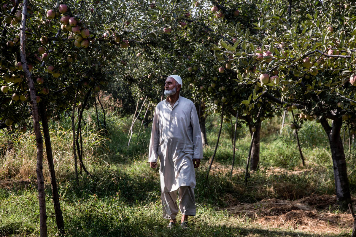 Ghulam Mohiuddin Mir, an apple orchard owner and resident of Kremshore village in Budgam district, claims he used to sell a box of apples for 1,000 rupees ($14) to an Indian trader. But after the abrogation of Article 370, he says that the cost halved. 'Our business is running in a huge loss since India abrogated the special status of Jammu and Kashmir,' he said. [Mukhtar Zahoor/Al Jazeera]