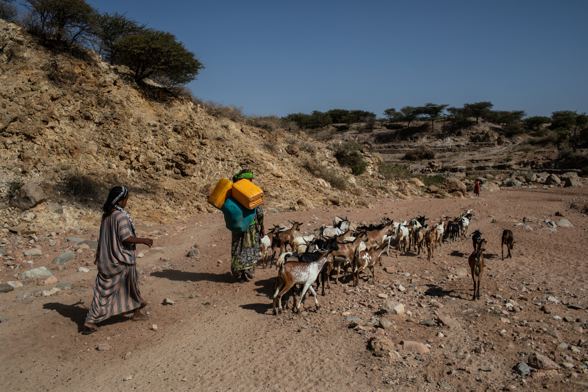 Women herd their goats through a dry riverbed in rural Dire Dawa City Administration in Ethiopia. [Will Baxter/CRS]