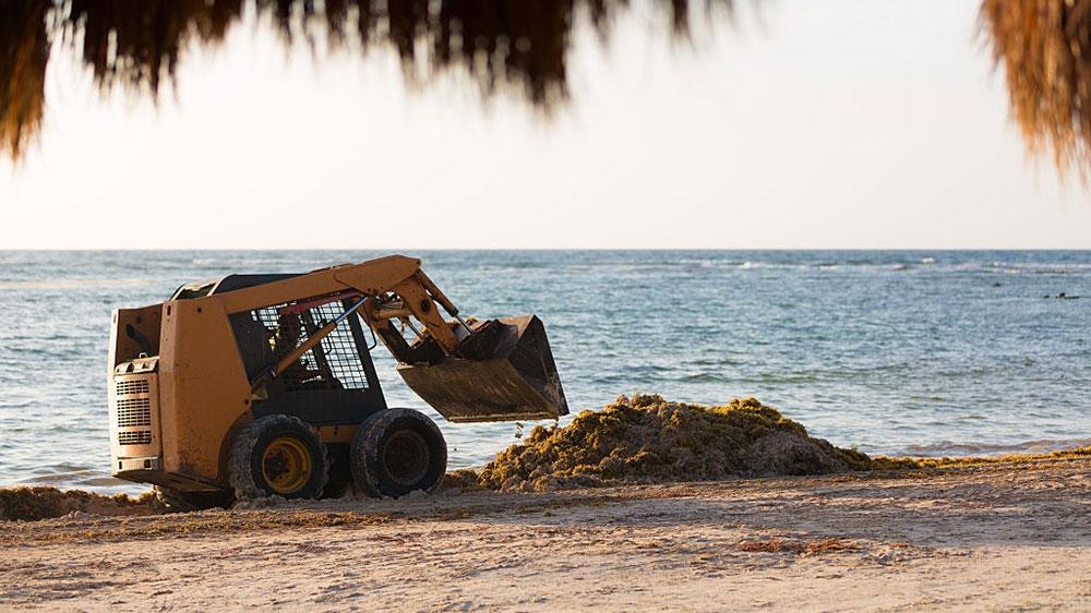 Decomposing algae is ruining some beaches in Mexico | News | Al Jazeera