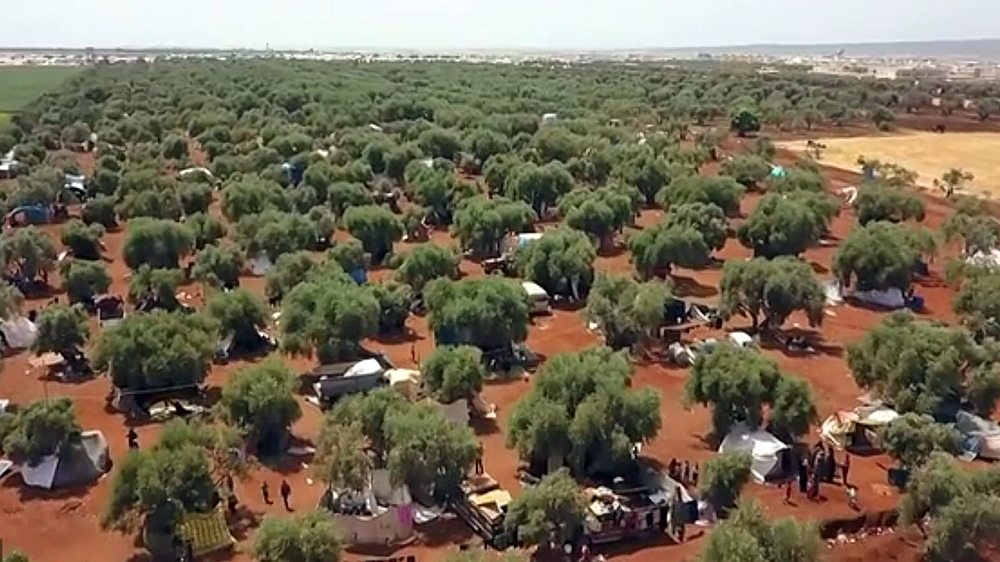 Atmah olive groves Syria refugees