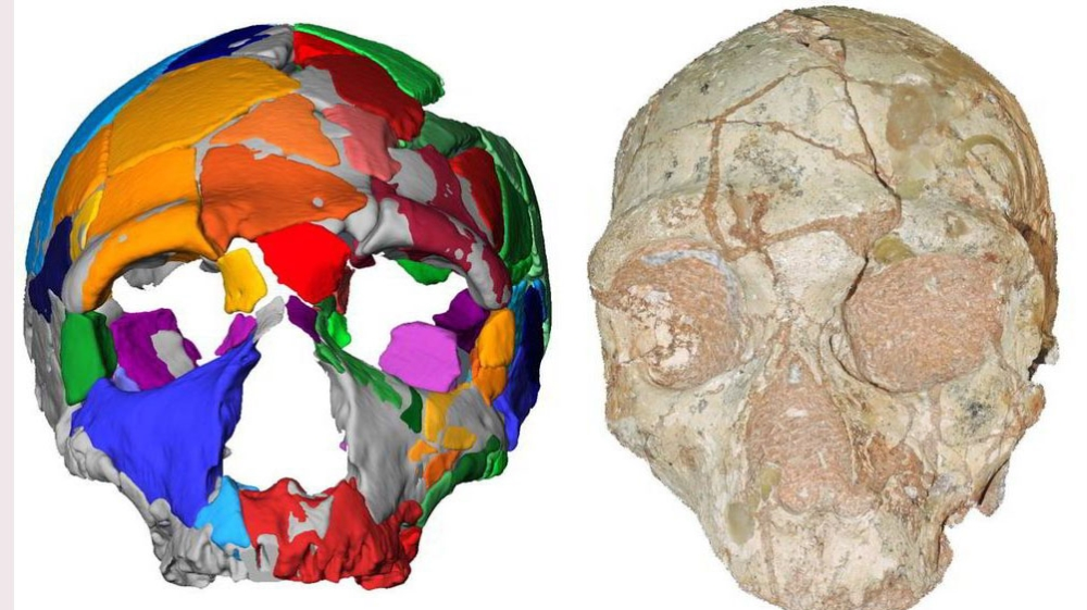 The Apidima 2 cranium (right) and its reconstruction (left). Apidima 2 shows a suite of features characteristic of Neanderthals, indicating that it belongs to the Neanderthal lineage.