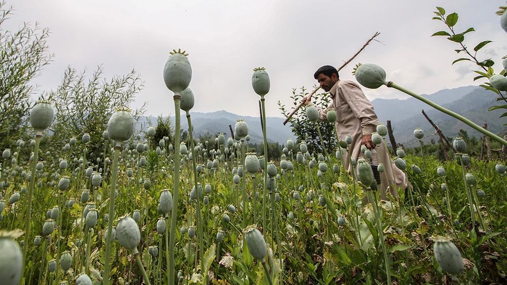 Drug use in Kashmir