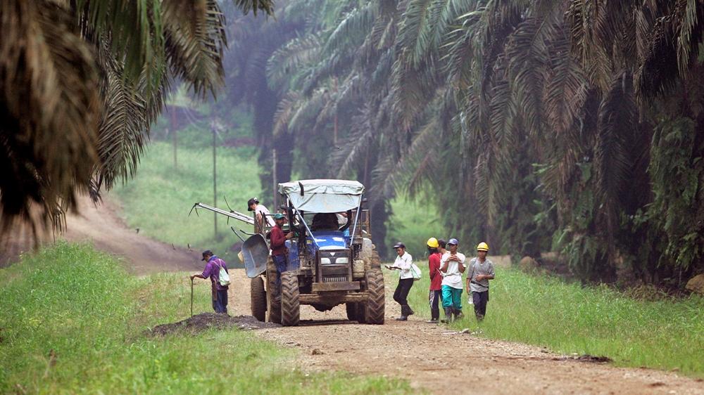 Malaysia Sabah plantation