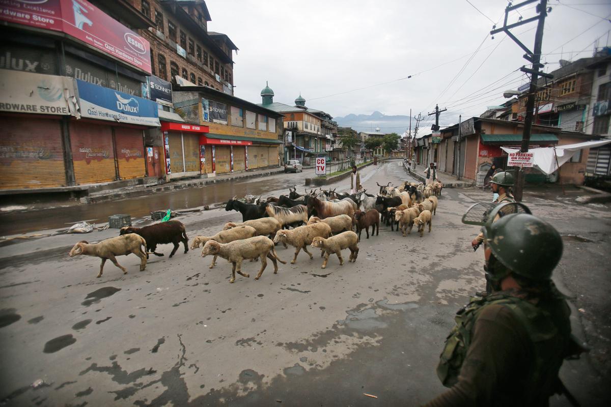 Indian paramilitary soldiers on patrol as a Kashmiri livestock seller crosses the street ahead of Eid al-Adha in Srinagar [Mukhtar Khan/AP Photo]