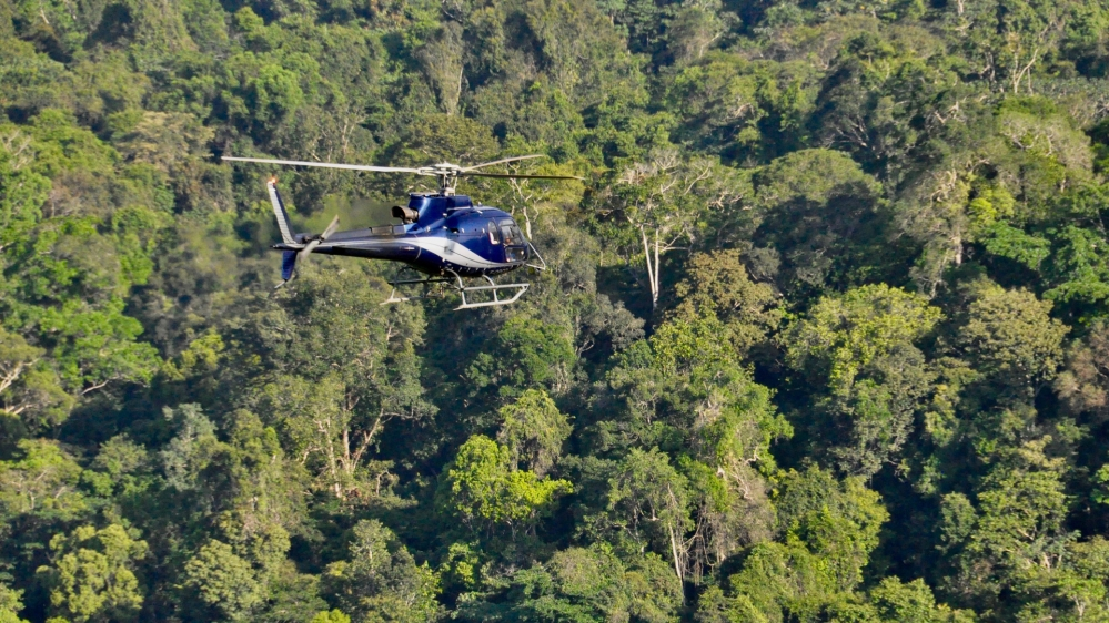 Illegally tapping French Guiana's forest of gold