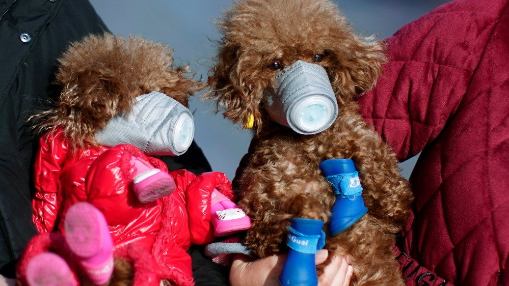 Dogs wearing masks are seen at a main shopping area, in downtown Shanghai