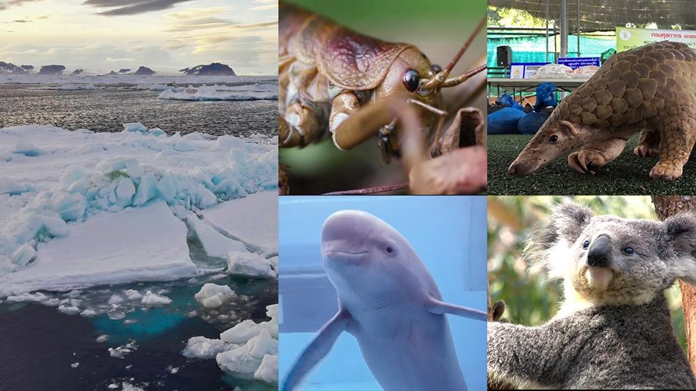 Five wildlife films to watch during lockdown